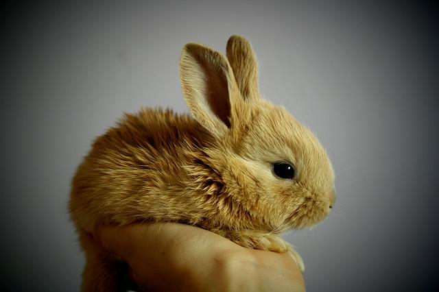ruka s králíčkem